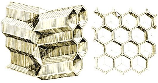 Bal Arıları ve Altıgen Peteklerin Sırrı